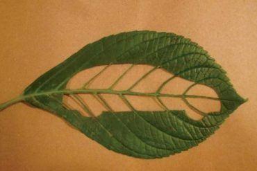 Earth Day Car Leaf