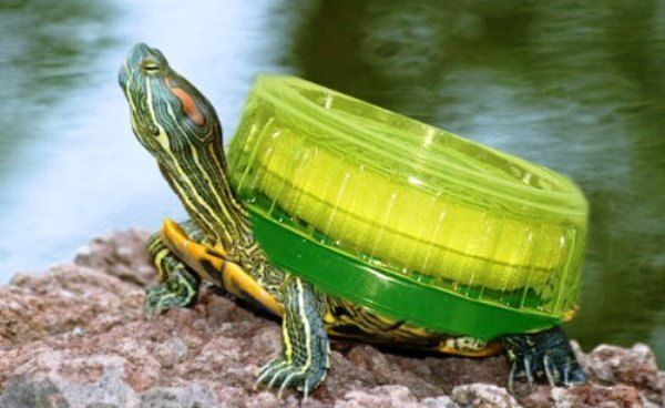 Turtle Car Wax Review