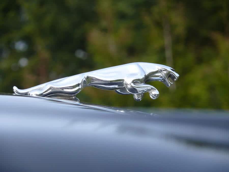 jaguar leaper victor alting van geusau