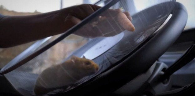 Hamster Driving