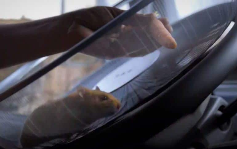 Hamster Driving