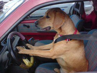 Good dog driver