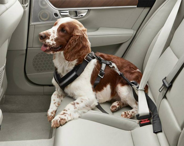 Dog Harness Car Seat Bekt