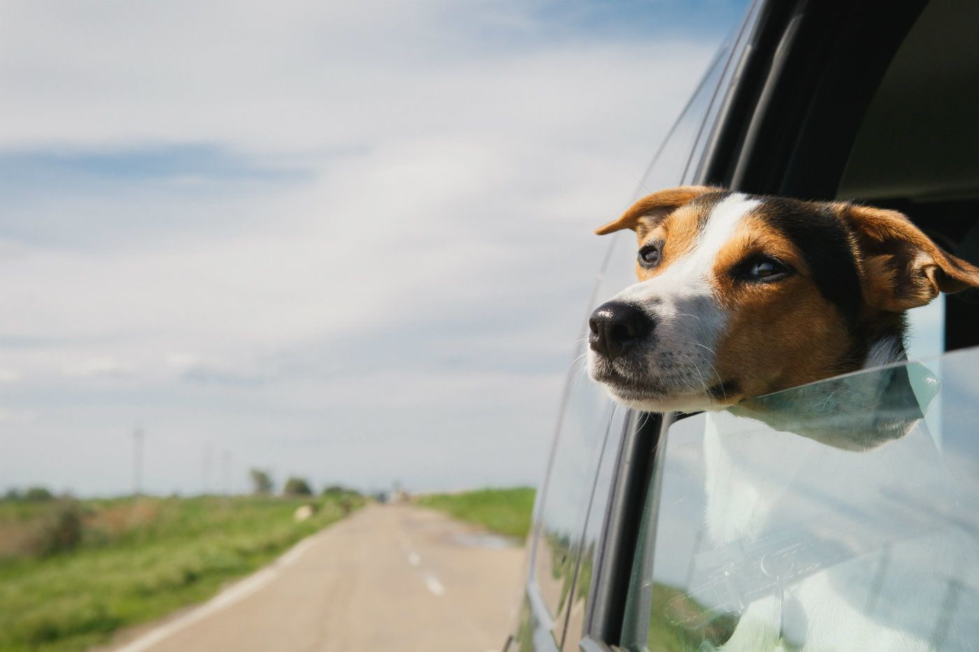 Canine Car Seats & Rolling Refrigerators: Auto Trends Around the World