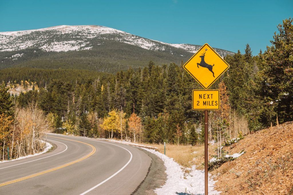 How To Avoid Hitting a Deer: always watch for signage as you are traveling.